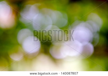 Abstract Bokeh background of tree sky light and sun shade