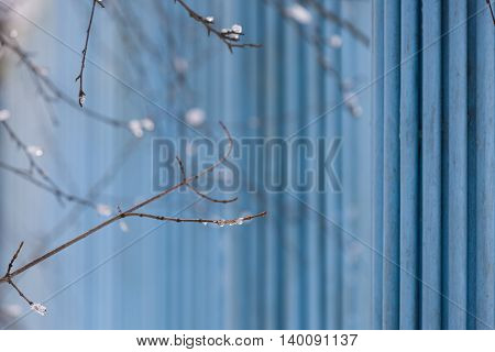 Tree branches with snow and water on the blue background. Spring and winter.