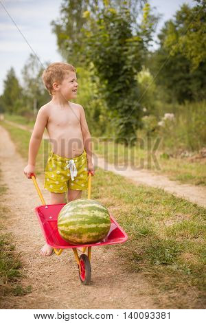 Adorable little kid boy smiles and rolls watermelon on a garden cart. Harvest in the countryside. Watermelons in the village. little helper. summer vacations in countryside.