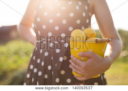 Woman in a brown dotted dress holding a yellow bucket full of organic lemons. Citrus harvest in the garden. Healthy lifestyle. Countryside life. Lady with fruit. Countryside landscape.