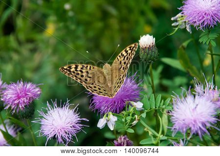Closeup butterfly on flower in summer day
