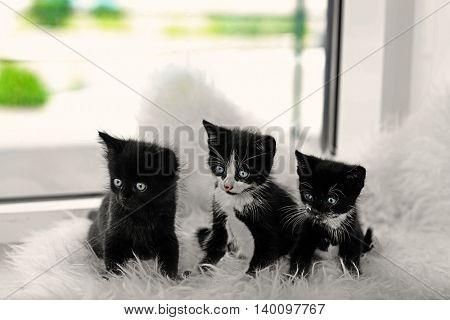 Cute small cats on windowsill