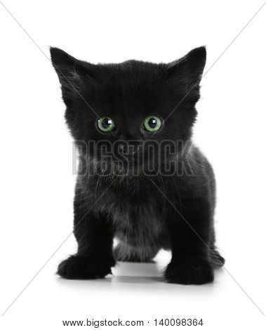 Cute small cat, isolated on white