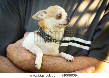 Man holding fluffy dog in the park