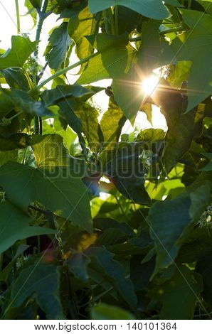 Nature through high thickets of plants and shrubs seen the sun