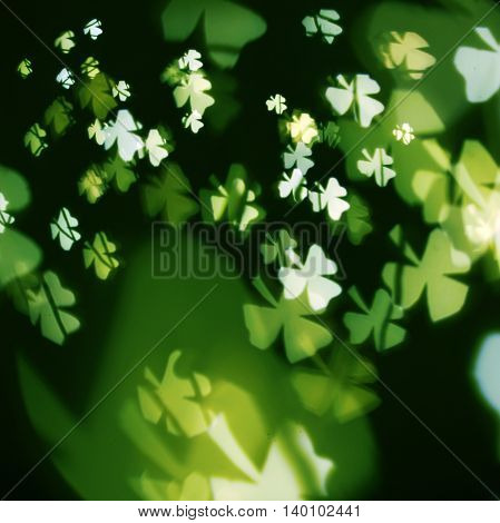 Blurred background of green shamrock clover for St Patricks Day