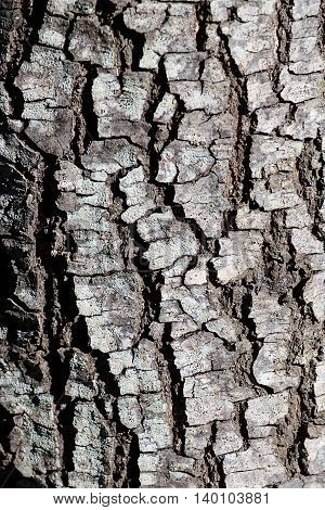 Old pine tree bark texture. Old tree. Old pine. Conceptual photo of age and time