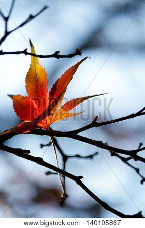One single remaining autumn leaf stuck in tree branch - autumn sky in background