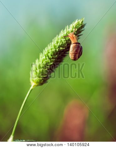 the snail closeup sitting on a green plant
