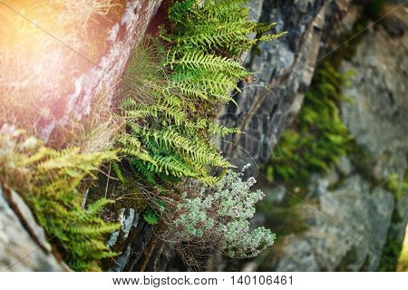 Nature Background With Fern, Moss And Stones