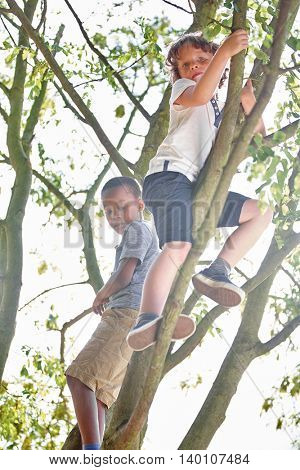 Two kids climbing a tree and having fun in the nature
