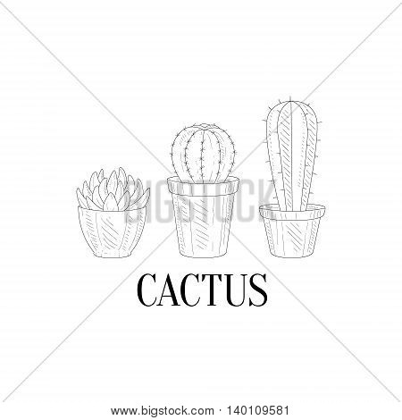 Three Chubby Home Cacti Hand Drawn Realistic Detailed Sketch In Classy Simple Pencil Style On White Background