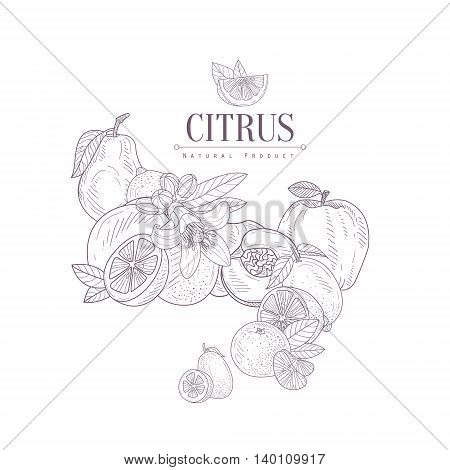 Fruit Still Life SEt Hand Drawn Realistic Detailed Sketch In Classy Simple Pencil Style On White Background