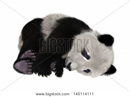 3D rendering of a panda bear isolated on white background