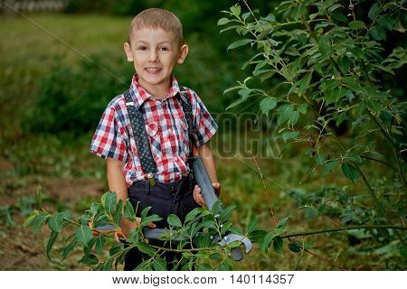 boy cuts off branches of the shrub shears