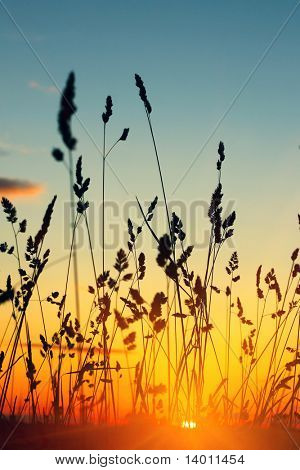Stems of wild herbs in sunrise light