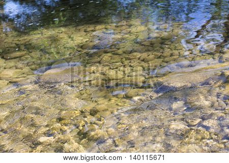 Solar river shoal water and rocks on the bottom with the reflection of sky and trees