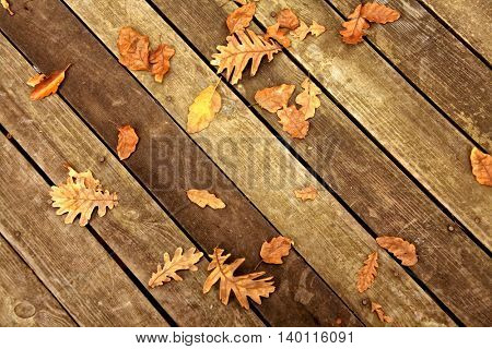 close up shot of autumn leaves on the ground