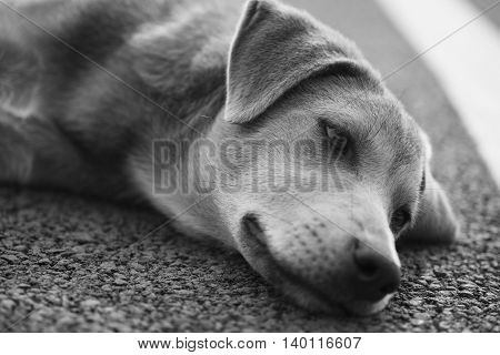 alone animal background black canine city cute dark dirty dog doggy eye face freedom fur garden hair head home homelessness hoping isolated little loneliness lonely looking mammal nature nose outdoor outdoors outside park pet pets portrait puppy sad sadne