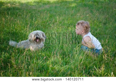 little boy with shaggy dog in summer park
