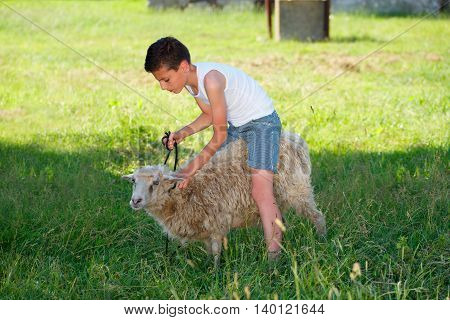 young boy with sheep in the village