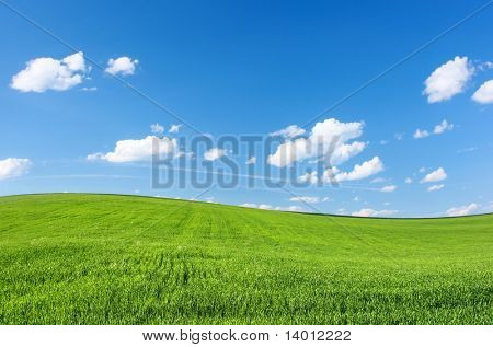 Meadow with green grass and