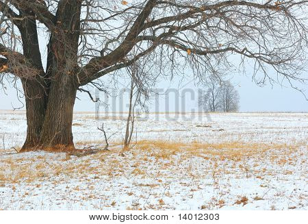 Winter tree and dry yellow grass in snow