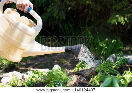 watering very green flowers in a garden