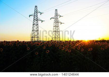 i colori del cielo al tramonto, con girasoli