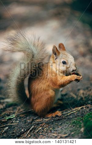 squirrel eating a nut in the park