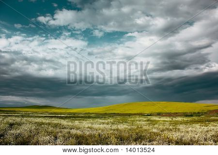 Storm clouds over yellow meadow