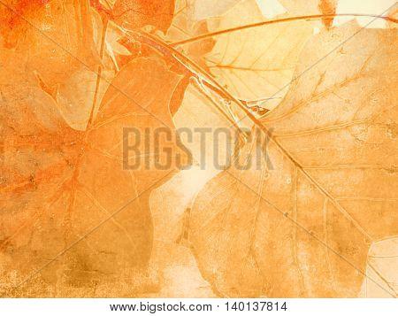 Leaf veins background in soft vintage style
