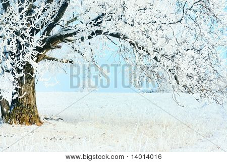 Frozen tree with blue sky