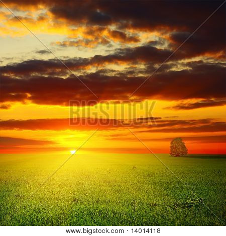 Meadow with green grass and alone tree under sunset