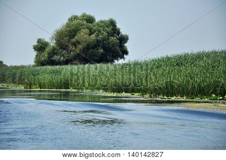 Quiet water channel in Danube delta. Romania