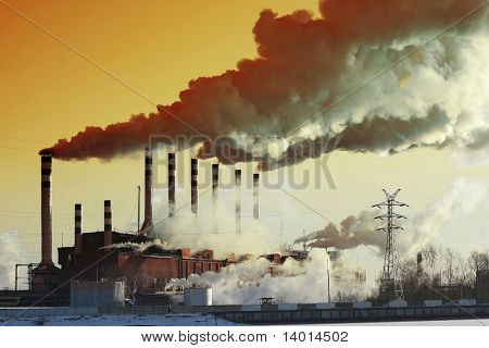 Plant with smoke