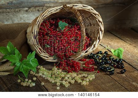 Red black and white currant in a basket and scattered on a wooden surface. Rustic style