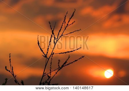 evening scene with twig on sunset background