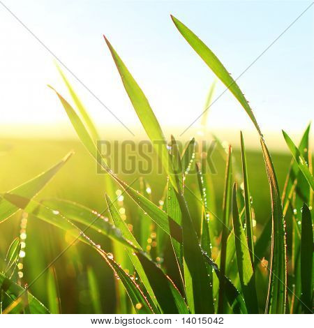 Green wet grass blue sky and sunlight