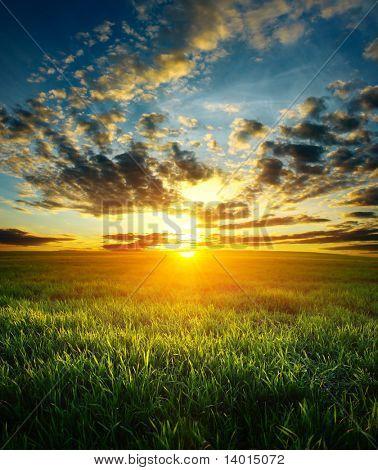 Puesta de sol sobre el campo de hierba verde