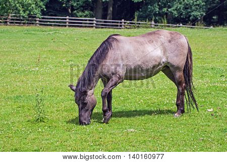 Portrait of a horse in a wildpark