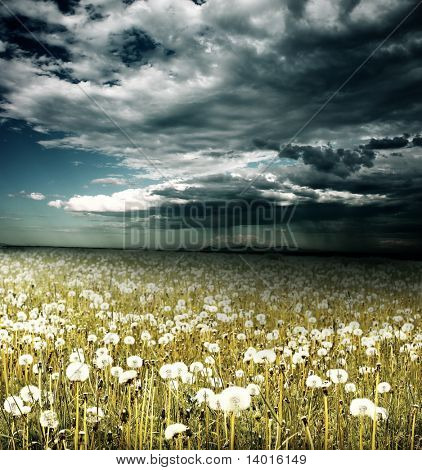 Field with dandelions under storm clouds with rain