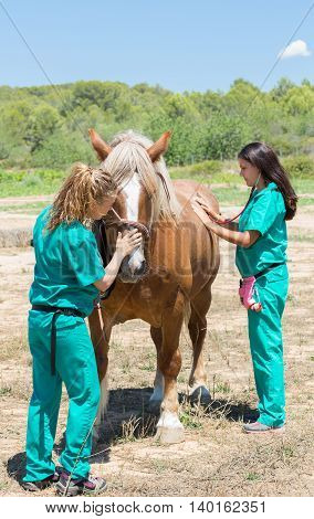 Veterinary horses on the farm doing work of healing