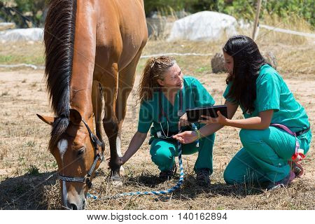 Veterinary for horses on the farm making an inquiry with the tablet