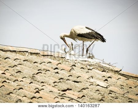 Stork came to his house on the roof