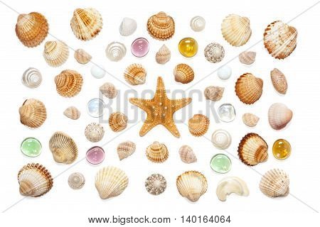 composition of exotic sea shells starfish and colored glass on a white background. top view