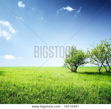 Meadow with green grass and group of trees under blue sky with clouds