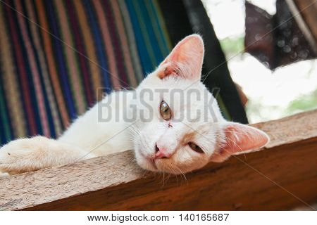 Sleepy cat on lay down on wood floor and staring to you.