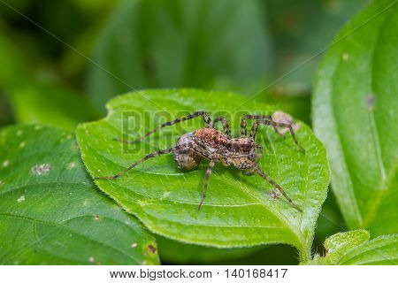 Close Up Spider In Forest