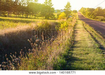 Sun shining through the foliage alongside a rural road.